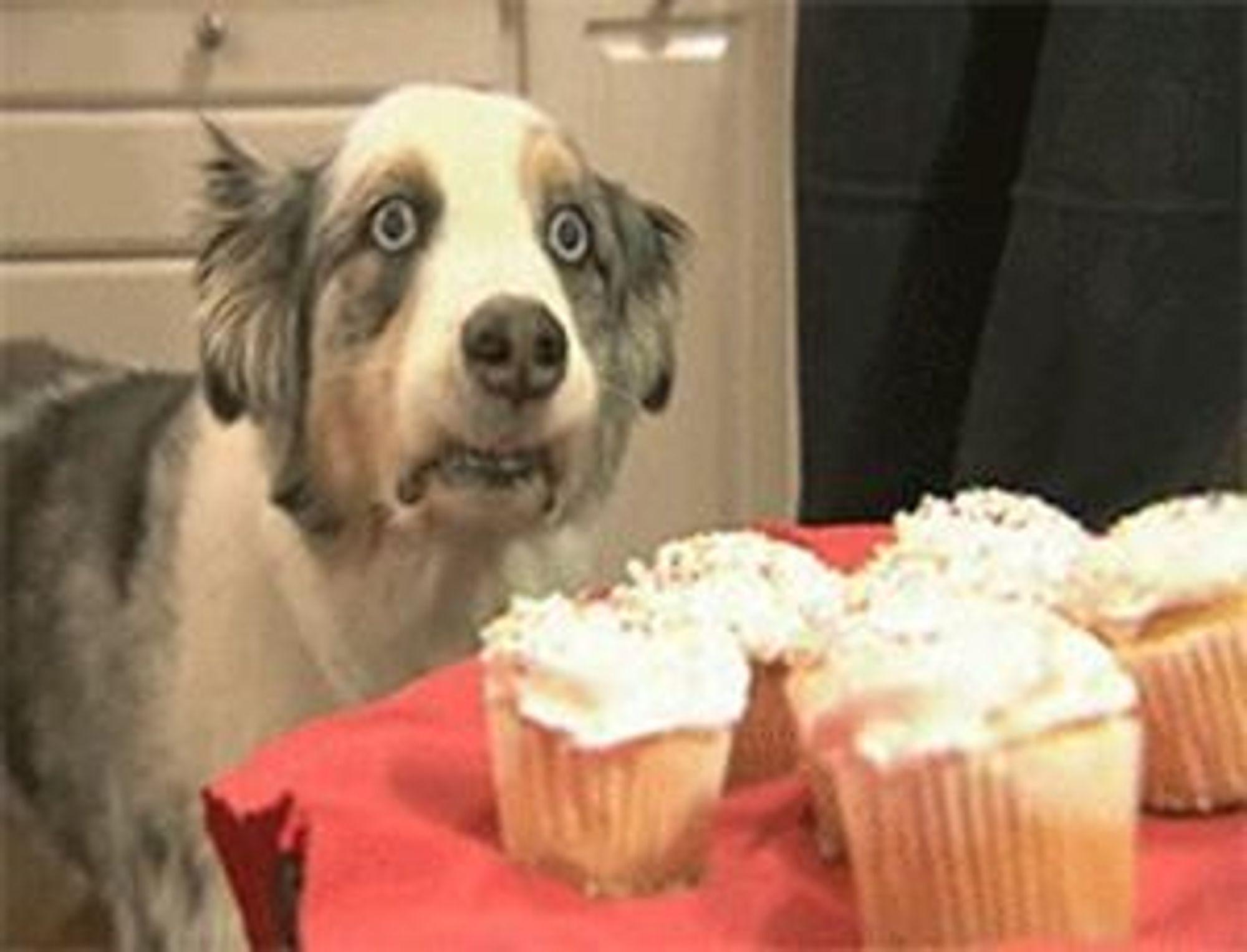 Cupcake_Dog.jpg