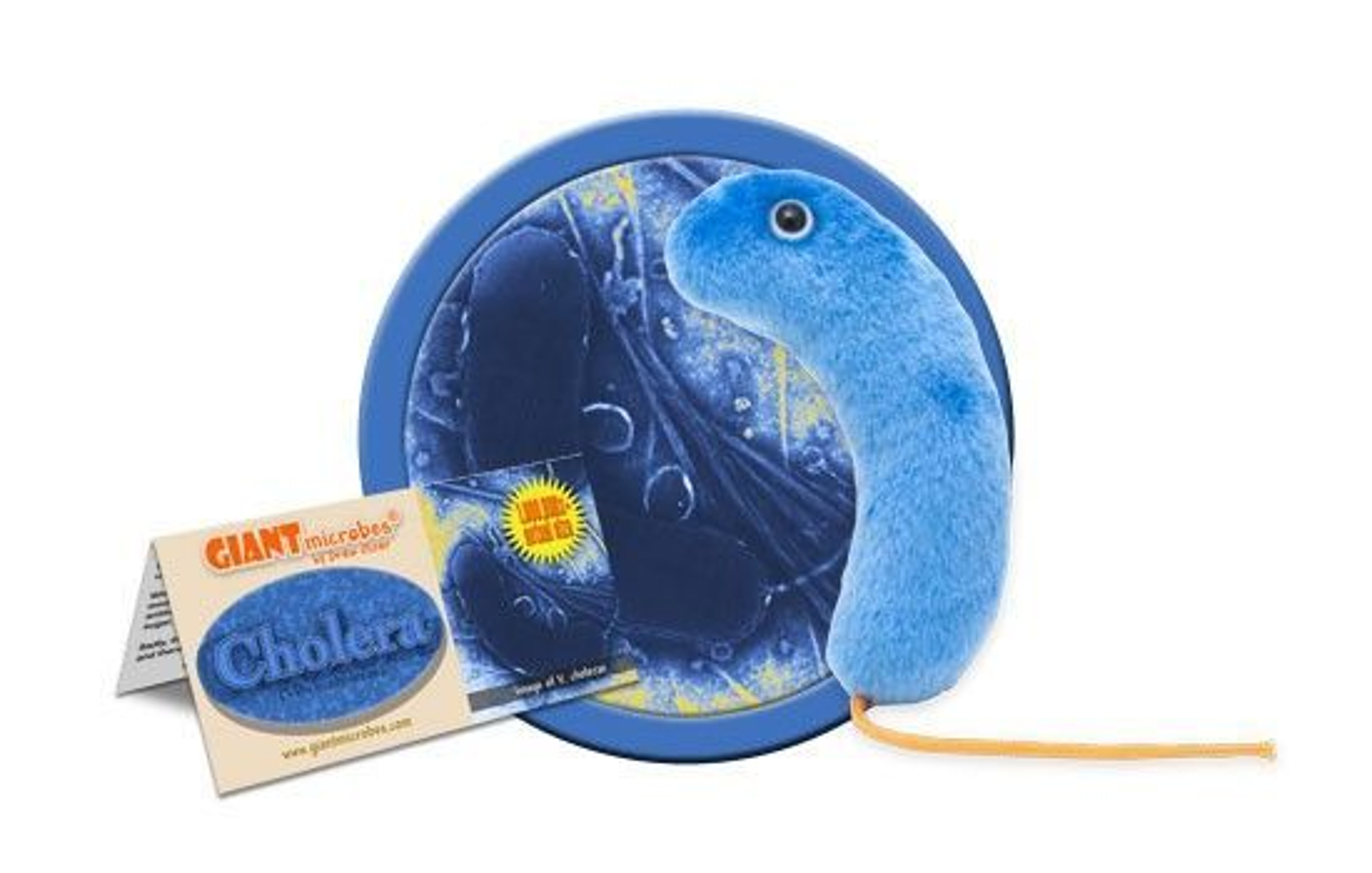 gmus-pd-0140_cholera_cluster.jpg
