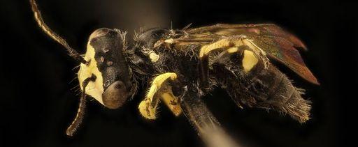 portada-insectagedon.jpg