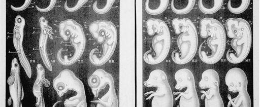 Haeckel_Anthropogenie_1874-825x340.jpg