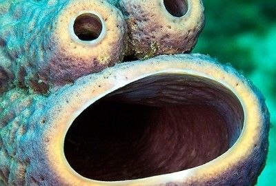 cookie-monster-sea-sponge-400x270.jpg