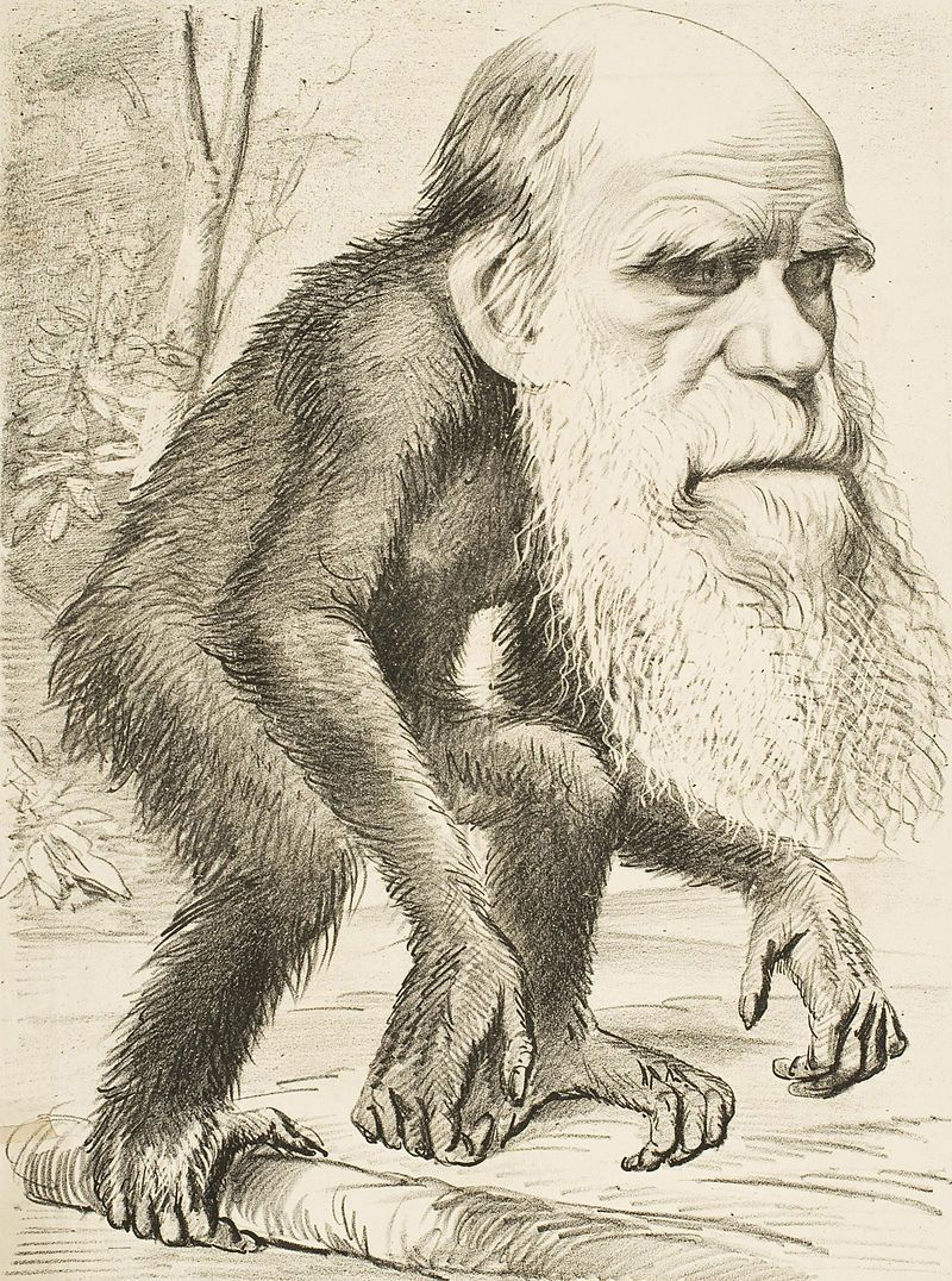 Editorial_cartoon_depicting_Charles_Darwin_as_an_ape_1871_as.jpg